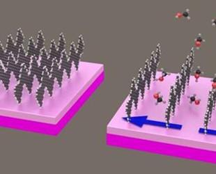 石墨烯纳米带赋予传感器前所未有的灵敏度