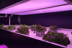 光转换技术:LED的下一波破坏式创新