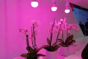 法兰克福展:植物照明/LED灯丝灯等