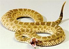 美国科学家师从响尾蛇 蛇形机器人迎来巨大进步