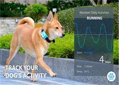 可监控宠物状态的Lucky Tag智慧项圈开始集资