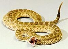 红外热敏材料与响尾蛇导弹