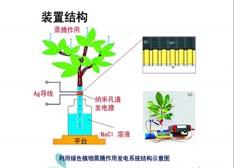 """武汉大学利用LED技术设计出""""树灯"""":路灯直接用树供电"""
