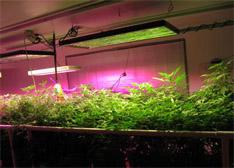 LED植物生长灯的发展现状及前景分析