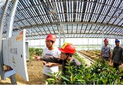 太阳能光伏农业项目前景分析