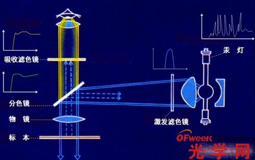 荧光显微镜原理及应用解析