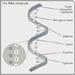 RNA检测研究获突破 医疗等领域意义重大