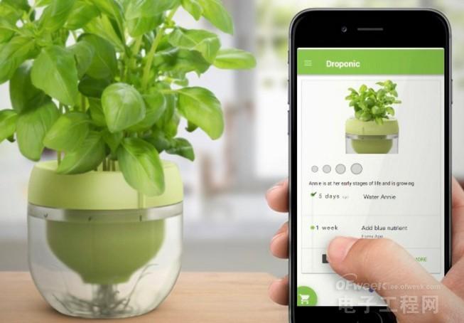 在家就能种出一个花园 无土栽培智能花盆把厨房变成菜园