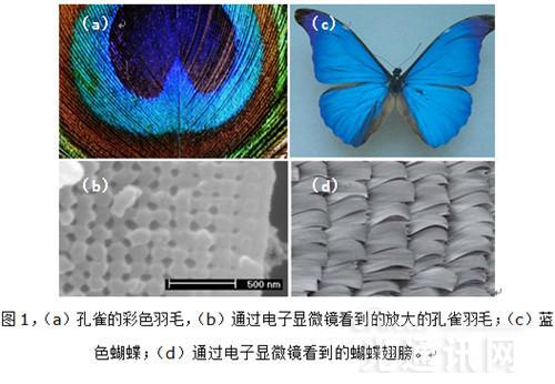 光子晶体光纤--开启中国光纤行业新纪元