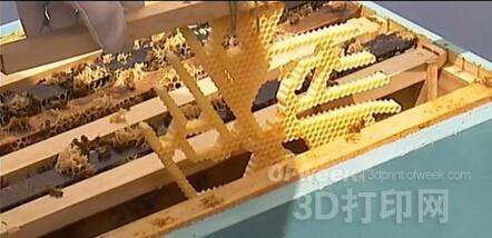新西兰科学家应3D打印蜂巢提升蜂蜜生产效率