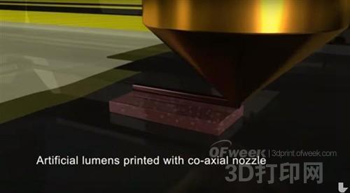 生物学新前沿:3D打印创建自组装血管系统