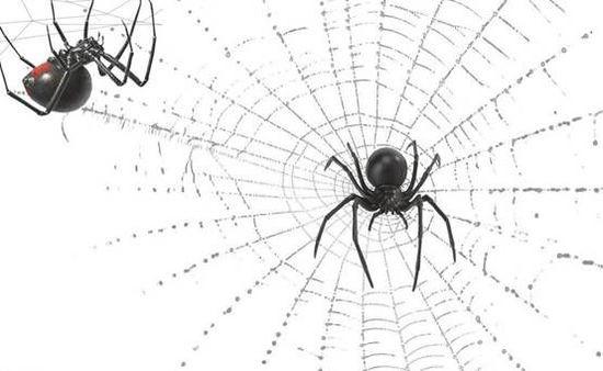 从蜘蛛网到物联网 人类走了多久