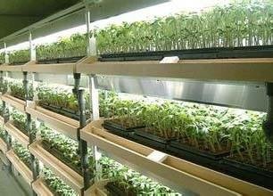"""台企捞""""绿金""""有妙招 LED植物照明市场前景广阔"""