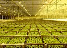国际主要厂商的LED植物照明业务发展及优势分析