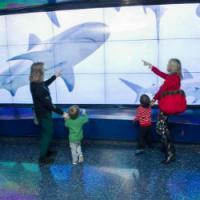 世界第二大水族馆安装LG电视墙