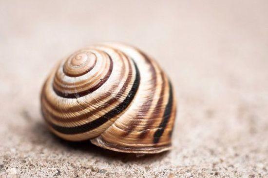蜗牛壳上的灵感:锂电池或迎来更持久的续航