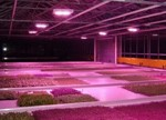 【深度分析】2015年LED农业照明产业现状与发展趋势