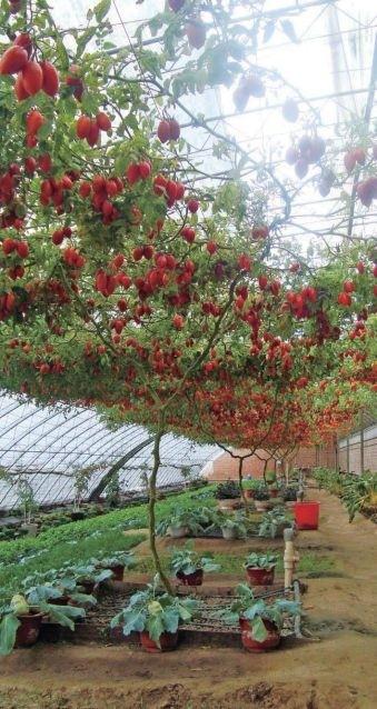 """番茄联合国的智慧农业之道 用""""农场云""""轻松种菜"""