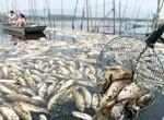 """安徽渔民遭""""生态劫"""":水污染致经济损失1.9亿"""
