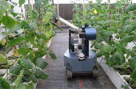 黄瓜采摘机器人-农业机器人离我们有多远