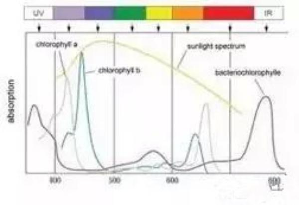 如何按照作物不同需求进行补光?