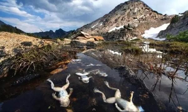 《消逝——两栖动物的灭绝》·摄于美国   奢华的化石能源家底使得美国以5倍与中国的人均碳排放量,一直稳居碳排放榜榜眼的位置。但伴随而来的雨水酸化、水体污染等问题也使得野生动植物付出了惨痛的代价。