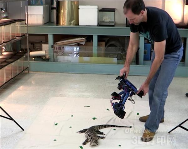 大量活蜥蜴在 Irschick 的实验室中被3D 扫描