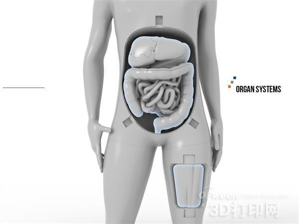 3D打印优势多多:打印解剖模型学习人体结构