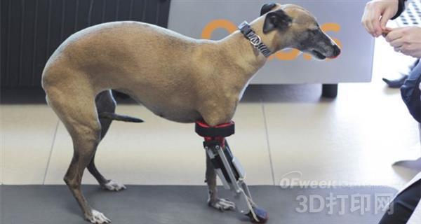 墨西哥首支狗狗3D打印假肢成功安装