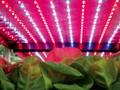 中国植物照明工厂发展概况及应用案例分析