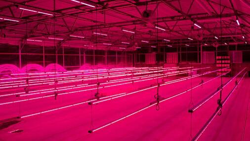 飞利浦照明和csu签订合作 成立led植物照明单位