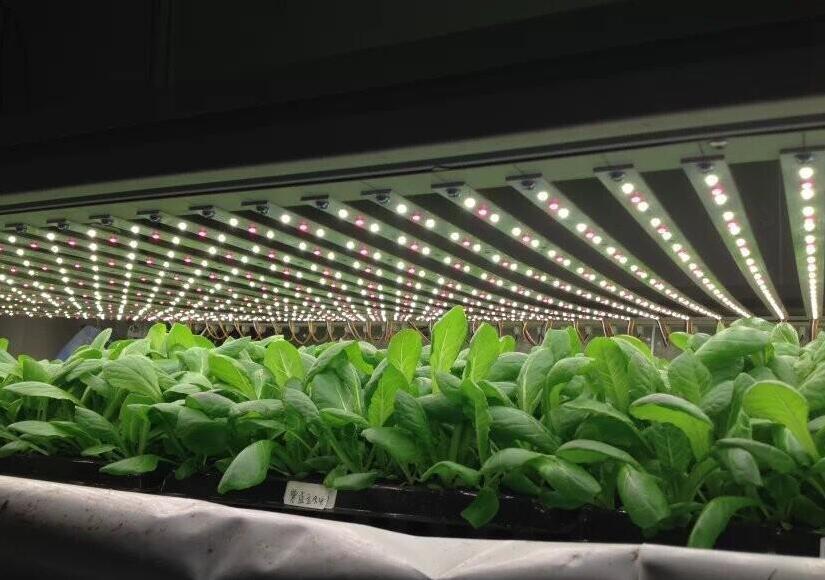 植物生长灯有什么作用 是否会影响人体健康?