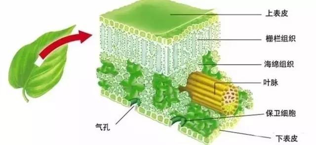 植物生长对光谱有选择性 你知道吗?