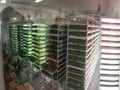 植物照明工厂的真正潜力在哪?你愿意为健康食品多掏钱吗?