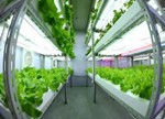 全球植物工厂发展现状及瓶颈分析