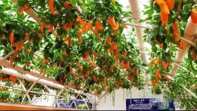 植物照明商业化