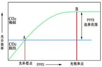 LED植物燈的光譜參數是個啥?