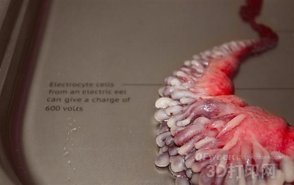 吓!艺术家探索用动物细胞3d打印人体新型器官
