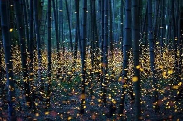 神奇的传感器:让脑细胞像萤火虫一样发光