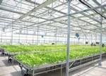 借力LED,植物工厂发展正当时