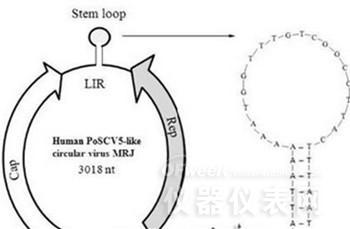 南京口岸开展基因组测序检测 发现全新环状新病毒