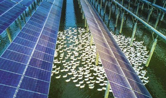 """12月8日,信义光伏寿县东大圩电站基地正在进行紧张施工。该项目共流转河滩地8000亩,总投资27亿元,装机容量300兆瓦,是我省连片最大、最集中的光伏电站。项目按照""""发电、养殖、种植、观光、旅游、采摘、垂钓、体验式休闲""""等""""八位一体""""的功能进行规划设计,打造光电生态产业园。项目完成后,年发电量39611."""