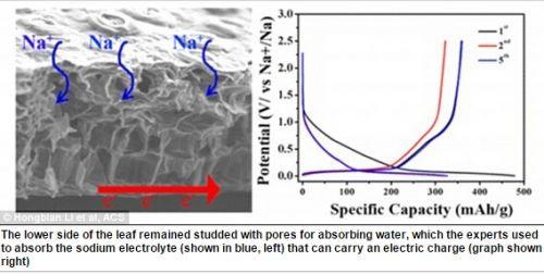 发现:树叶可替代石墨烯制成钠电池 续航比锂电池长