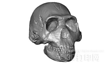MorphoSource:免费提供可3D打印化石模型的网站