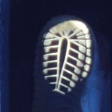 英国科学家开发出通过鞋印分析确定身份的新技术