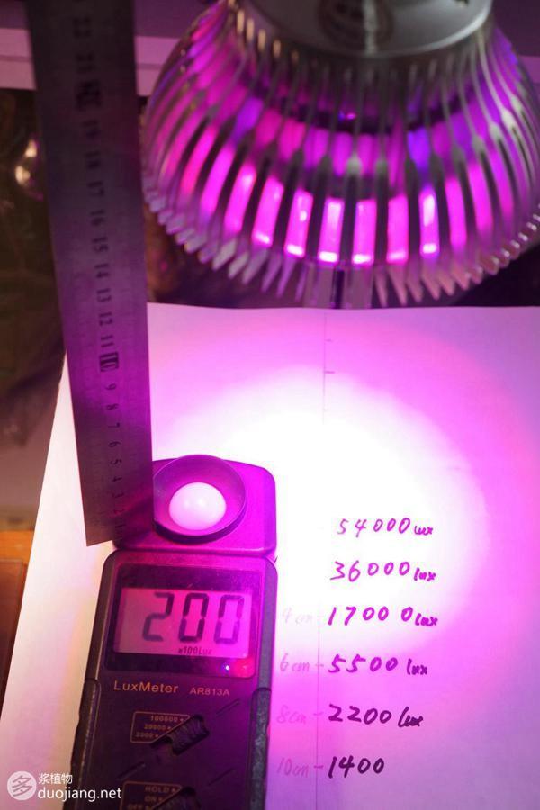 多肉植物紅藍光與全光譜LED燈半年對比測試