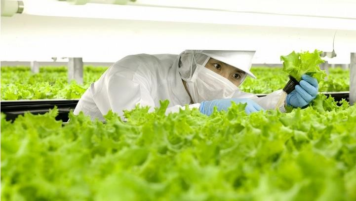 一家日本公司要建世界上第一个机器人农场
