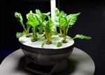 解读LED照明植物工厂的生长秘方