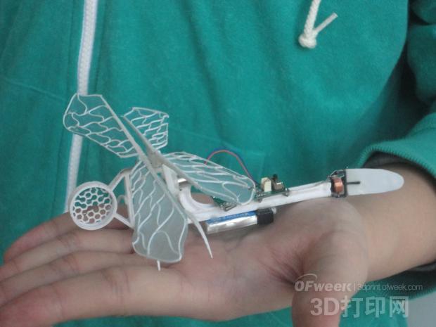 图1  3D打印的1:1蜻蜓实体模型