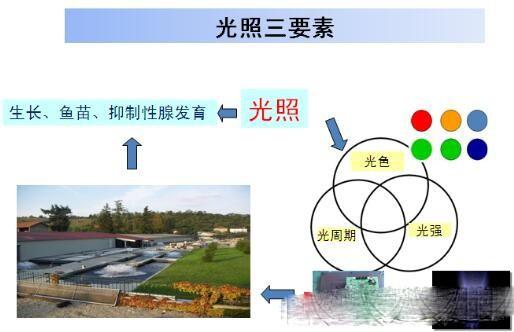 LED在工厂化水产养殖应用大有可为